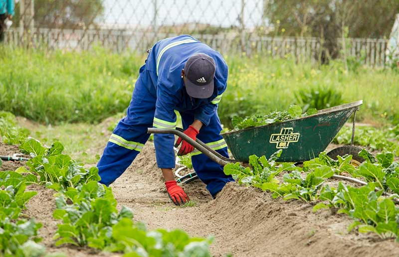 agricultural protective gear